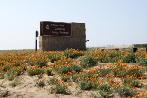 Antelope Valley California Poppy Reserve Image