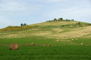 Hay Bales On Sloping Hill